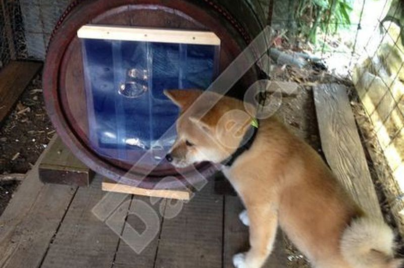 Hundetür aus PVC Streifen
