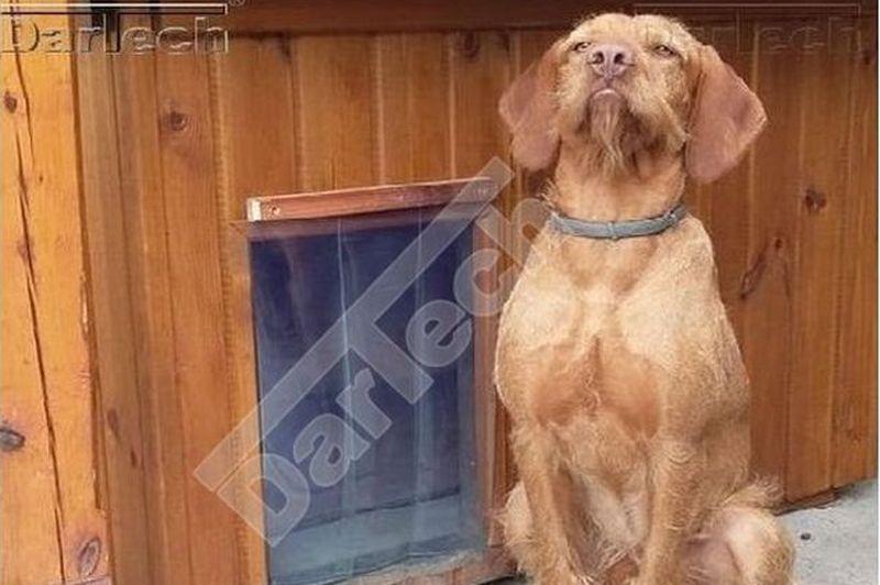 PVC Hundetür, glasklar